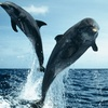 Up to 46% Off Cruise from Dolphin Quest