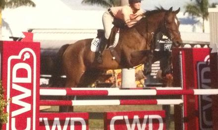 $28 for $50 Worth of Horseback Riding — Shelby Oaks Farm