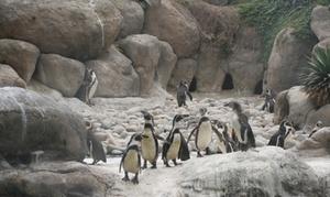 Zoo de Barcelona: Entrada al Zoo de Barcelona para adultos y niños desde