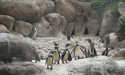 Entrada al Zoo de Barcelona para adultos y niños desde