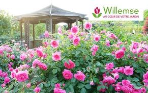 Willemse France: Graines, plantes, jardins, fleurs... :Un bon d'achat de 50 euros au prix de 25 euros à valoir sur le site Willemse