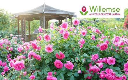 Graines, plantes, jardins, fleurs... :Un bon d'achat de 50 euros au prix de 25 euros à valoir sur le site Willemse