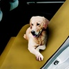 $8.99 for a Pet Parade Waterproof Pet Seat Cover