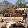 Zoo and Learning Centre Entry: Child (AED 7), Adult (AED 20)