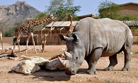 Zoo Entry Learning Centre Session and Optional Truck or 4x4 Safari for Up to Six at Al Ain Zoo