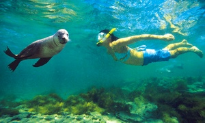 La Jolla Water Sports: Snorkeling Tour for One or Two at La Jolla Water Sports (Up to 51% Off)
