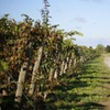 55% Off Winery Tour with Tastings at Lailey Winery