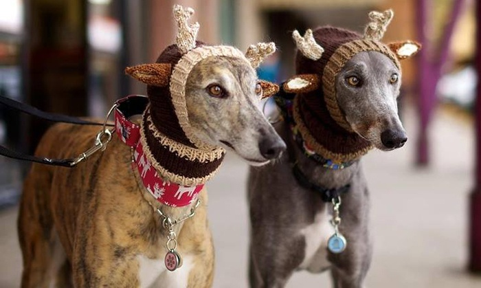 Dogs Dressed As Reindeer Pattern Free