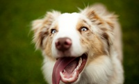 GROUPON: Up to 50% Off Grooming Package at Happy Tail Grooming Salon Happy Tail Grooming Salon