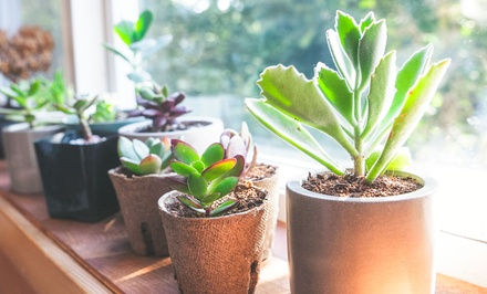 $28 for a Three Month Subscription to Succulent Studios Monthly Plant Delivery ($49.50 Value)