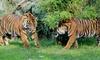 Zoo Osnabrück - Osnabrück: Tageskarte Zoo Osnabrück inkl. Winterzauber, Kinderkarussel und Kunsteisbahn im Zoo Osnabrück (bis zu 44% sparen*)