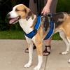 PetSafe EasySport Dog Harness