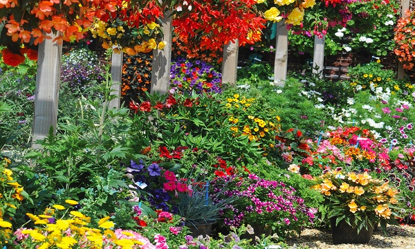 Summer Bedding Plants Groupon, What Is Meant By Bedding Plants