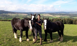 Wicklow Equitours: 90-Minute Horse Riding Adventure Experience for One or Two with Wicklow Equitours (Up to 29% Off)
