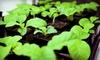 Ohana Greenhouse - Kalihi - Palama: Hydroponic Starter Kit or $49 for $100 Worth of Hydroponic Gardening Supplies at Ohana Greenhouse (51% Off)