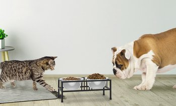 Petmaker Stainless Steel Single or Double Elevated Pet Bowl