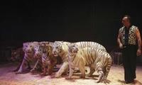 1 ou 4 places en gradin de face pour le spectacle du Cirque Maximum dès 10 € en tournée dans toute la France