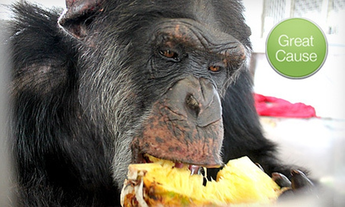 Save The Chimps - Palm Beach: $5 Donation to Help Feed Rescued Chimps