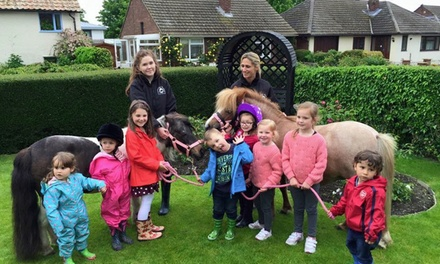 Cambridge Shetland Pony Parties