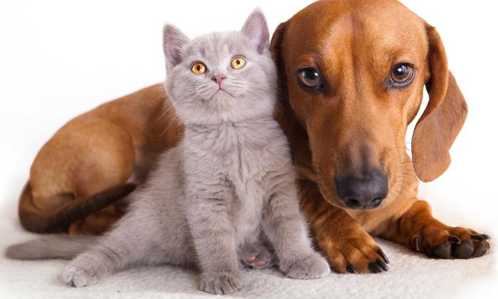 Dog Town Pet Resort - Palmyra: $11 for $20 Worth of Pet Daycare — Dog Town Pet Resort