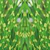 Set de plantes Miscanthus