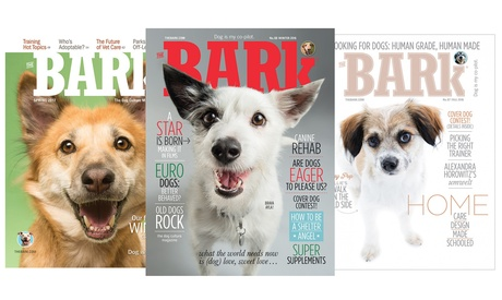 One-Year, 4-Issue Subscription to The Bark Magazine 1c4494ff-9ebe-4b10-abc8-8847f9bc49af