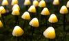 Guirlandes lumineuses solaires de 10, 20 ou 30 LED champignons