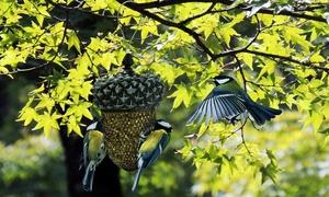 Gland pour nourriture à oiseaux