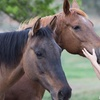 Up to 50% Off Pony Pals Course at Restorative Reins