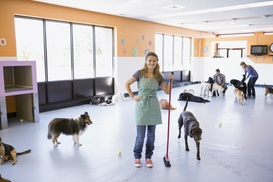 Sparta Pet Palazzo: $12 for One Day of Dog Day Care Services — Sparta Pet Palazzo