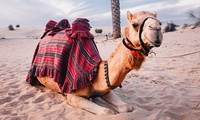 Evening Desert Safari for Up to Four with Global Sky Adventures Tourism (Up to 49% Off)