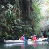 Three-Hour Glow-Worm Kayak Trip