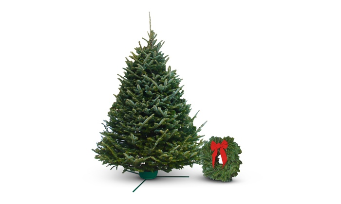 Fresh Cut Christmas Trees Delivered