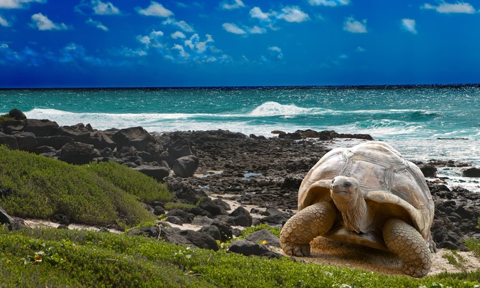 7-Day Ecuador and Galápagos Tour w/ Air from Indus Travels