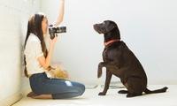 Herunterladbarer Onlinekurs für Tierfotografie mit 4 Paketen und 50 Lektionen bei PSD-Tutorials (43% sparen*)