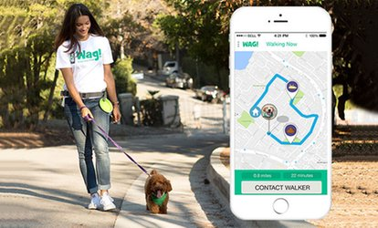 3 or 5 Dog Walks, or 2 Weeks of Unlimited 30-Minute Dog Walks for One Dog from Wag! (Up to 88% Off)