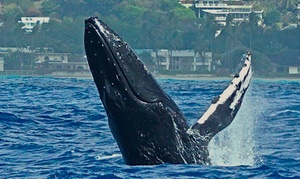 Up to 62% Off Whale Watching Tour at Living Ocean Scuba, plus 9.0% Cash Back from Ebates.