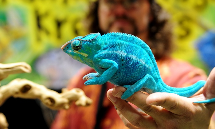 Reptile Super Show - Fairplex Exposition Center Building #4: Adult or Family Tickets to Reptile Super Show on January 10 or 11 (Up to 29% Off). Two Options Available.