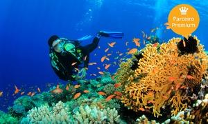 Submerso Scuba Diver: Submerso Scuba Diver – Porto de Galinhas: mergulho, CD com fotos e aula teórica para 1 ou 2 pessoas
