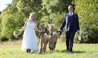 Silver, Gold or Platinum Wedding Alpaca Package with Charnwood Forest (Up to 50% Off)