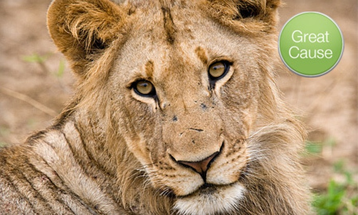 Survival Outreach Sanctuary - Tampa Bay Area: If 50 People Donate $10, Then Survival Outreach Sanctuary Can Build a Hurricane Shelter for a Lion
