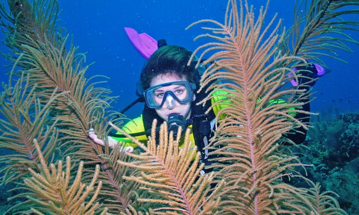 Seven Seas - South Baton Rouge: Discover Scuba Class with Diving Equipment for One or Two at Seven Seas (Up to 70% Off)