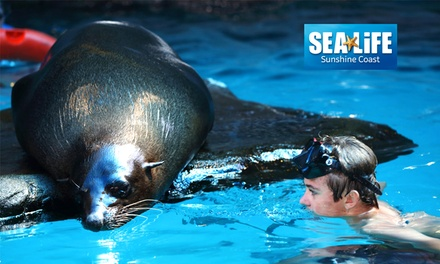 Seal Swim Experience and Entry at SEA LIFE Sunshine Coast Up to $116 Value