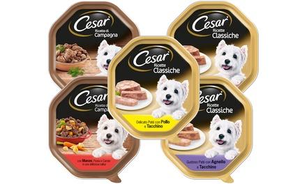 Fino a 28 confezioni di cibo per cani Cesar