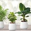 Lot de 4 plantes d'intérieur