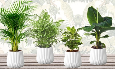 Set van 4 kamerplanten