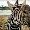 Up to 64% Off Safari-Park Visit for One or Four