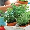 Grow Your Own Organic Herbs Seed Starter Set