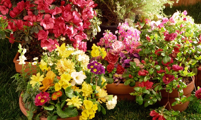 Plantasia Design Center - Olympia West: Gardening and Landscaping Classes at Plantasia Design Center (50% Off). Eight Classes Available.