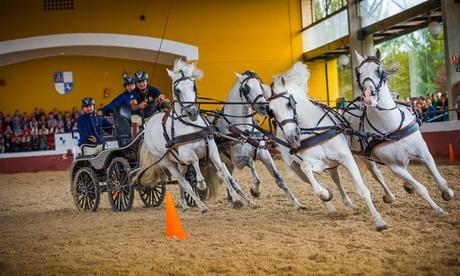 Visita guiada a las instalaciones y exhibición para 1, 2 o 4 personas desde 8 € en Yeguada de la Cartuja